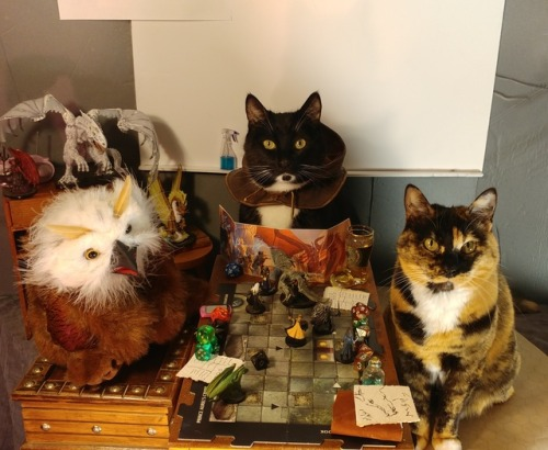 Pets Playing Board Games: Cats   Boardgame References